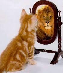 Cat is lion in mirror